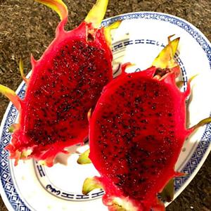 blog-1-dragon-fruit-harvest