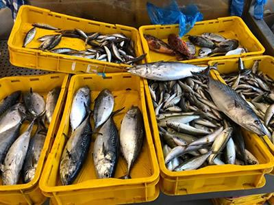 blog-2-fish