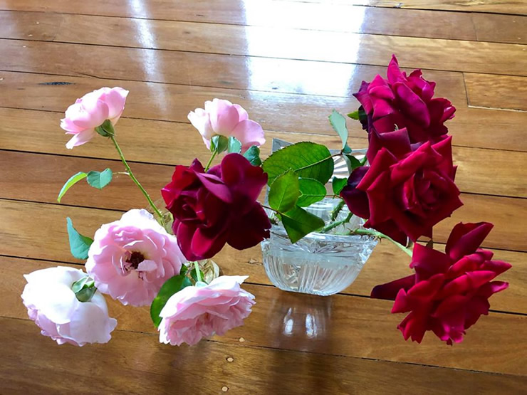 Roses from backyard